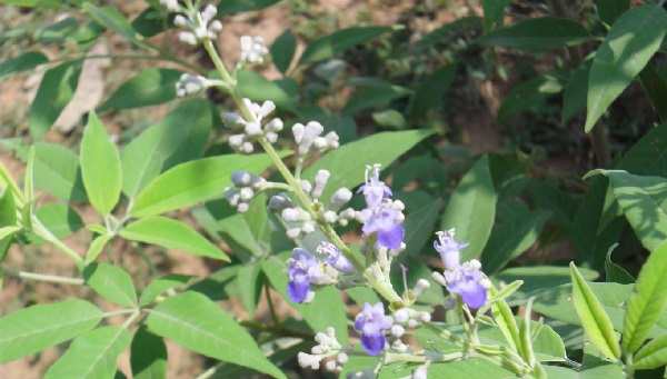 Photo of Natural Treatment for Cold and sinus problem